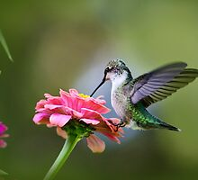Tranquil Joy Hummingbird Art by Christina Rollo