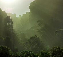 Rain Forest in Early Morning Fog by Mike Johnson
