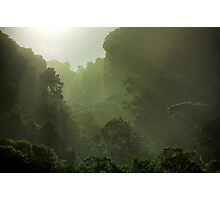 Rain Forest in Early Morning Fog Photographic Print