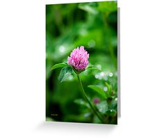 Pink Clover Flower Greeting Card