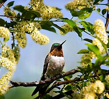 Hummingbird with Flowers by Christina Rollo