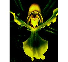 Guarded Heart - A New Perspective on Orchid Life Photographic Print