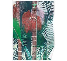 Bangalow Palms Poster