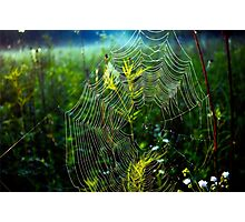 Dewey Web Photographic Print