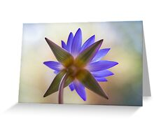 Shining Thru Two - purple waterlilly  Greeting Card