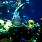 Shark Encounter by shutterbug2010