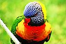 Rainbow Lorikeet #2 by Evita