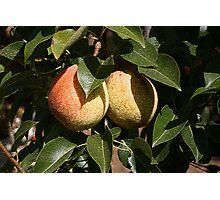 Pear Fruit Photographic Print
