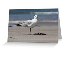 Seagull - Arrawarra Beach Greeting Card