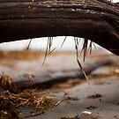 Driftwood by Daniel Wills