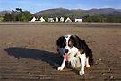 Laddie on the Lavan Sands by Michael Haslam