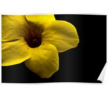 yellow flowers should never cry in the dark all by themselves. Poster