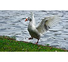 Goose In a Flap Photographic Print