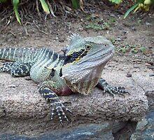 Australian Eastern Water Dragon - South East Queensland by Angela Simpkin