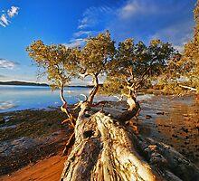 Trees at Mallabula  by bazcelt