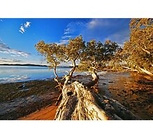 Trees at Mallabula  Photographic Print