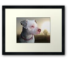 Bull Terrier a Dawn Framed Print