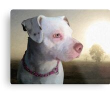 Bull Terrier a Dawn Metal Print