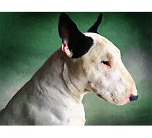 Bull Terrier on Green Photographic Print