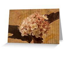 Bronze Leafed Spirea Blossom Macro  Greeting Card