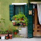Green wall, Burano - Italy by fionapine