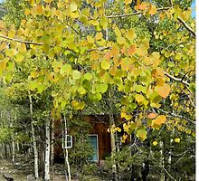 Behind the Aspens by Kathleen Brant