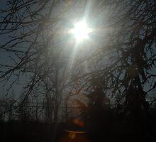Sun through the trees by spaztasticphoto