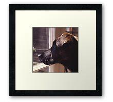 Kippa The Dog Framed Print