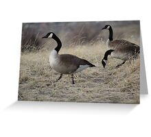 Geese in Winter Greeting Card