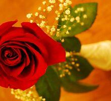 Valentine's Rose by spaztasticphoto