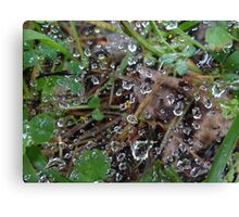 Rain soaked web Canvas Print