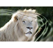 white lion face in the water Photographic Print