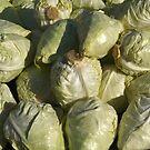 Food - cabbage by Marjolein Katsma