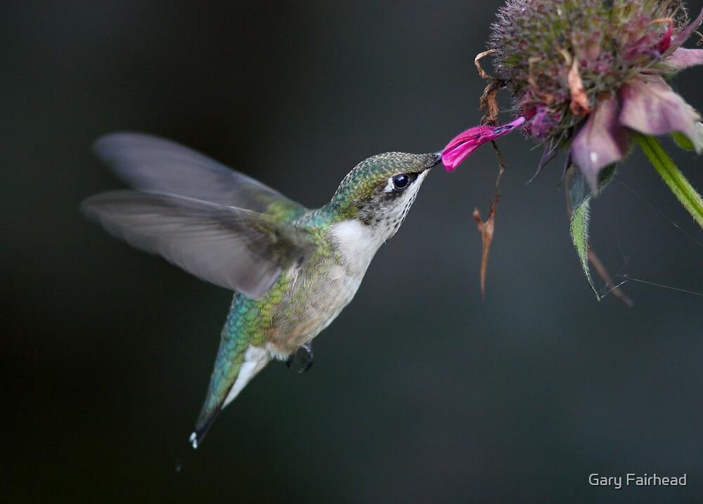The Last Petal by Gary Fairhead
