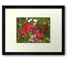 Autumn vine leaves Framed Print
