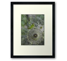 Ouch,Eek,Err...Walking On This Thing Is Really Hard! Framed Print