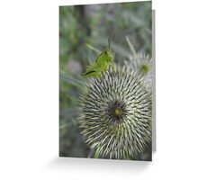Ouch,Eek,Err...Walking On This Thing Is Really Hard! Greeting Card