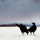 My birds by Morten Gjul