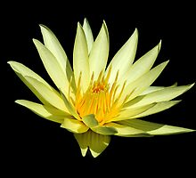 Water Lily In Space by Don Schroder