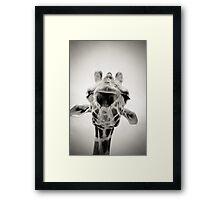 Giraffe II Framed Print