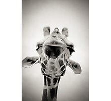 Giraffe II Photographic Print