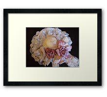 Spring Lace Framed Print