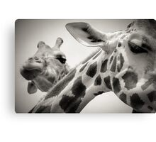 Giraffe III Canvas Print