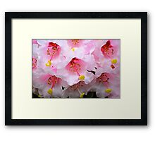 The Heart of a Rhododendron Framed Print