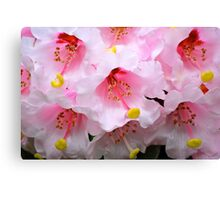 The Heart of a Rhododendron Canvas Print