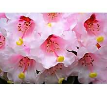 The Heart of a Rhododendron Photographic Print