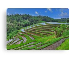 Batukaru rice terraces Canvas Print