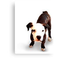 Brindle Bull Terrier Puppy Canvas Print
