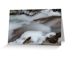 Bear Creek...Winter Greeting Card