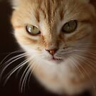 Moroccan cat by Tenee Attoh